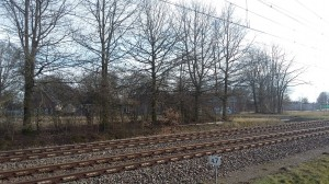 Bomenkap langs het spoor
